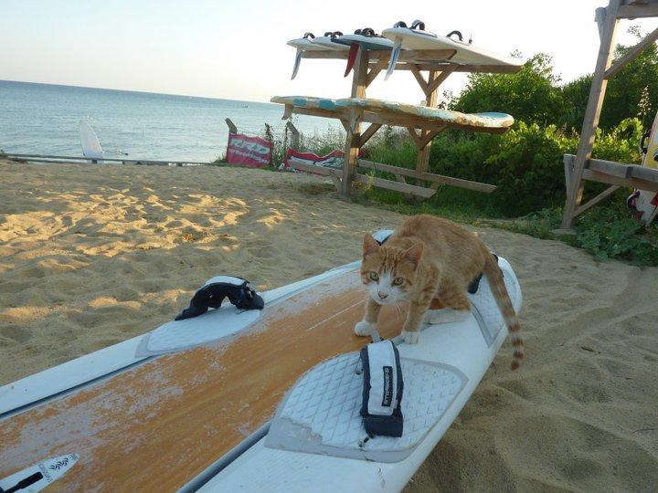windsurf okulu